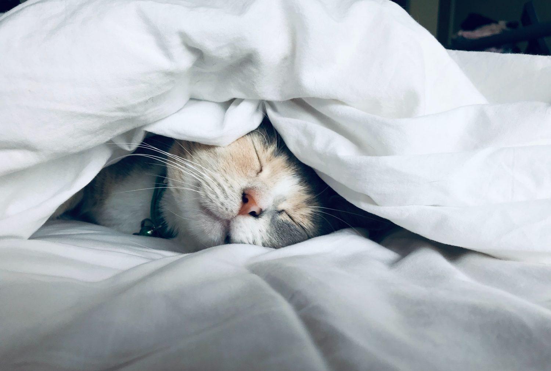 Katze im Wohlfuehlbett